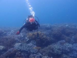 2013.04.30 砂辺ビーチ ライセンス講習 海中