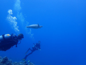 2014.08.26 慶良間ボート 体験ダイビング&ファンダイビング