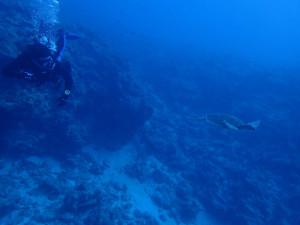 2014.11.03 チービシボート ファンダイビング