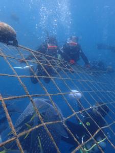 2015.04.17 青の洞窟&ジンベエザメ 体験ダイビング