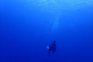 2016.07.27 慶良間ボート ファンダイビング